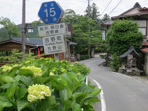 写真: 吉野路をゆく(2016年6月)