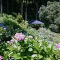 写真: 千葉県 茂原 あじさい屋敷