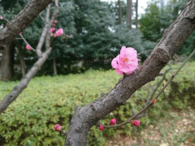 Photos: 小石川後楽園 おおさかずき