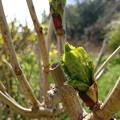 写真: 春の息吹き