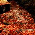 踏みしめる秋