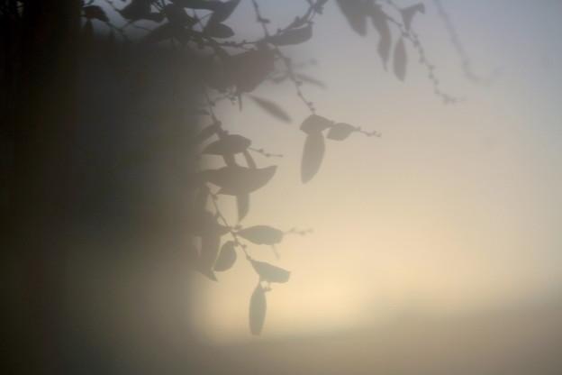 写真: 朝はここから~