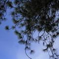 写真: Cleaning of sky