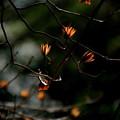 森のランプ
