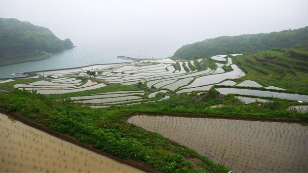 写真: 土谷棚田(5)