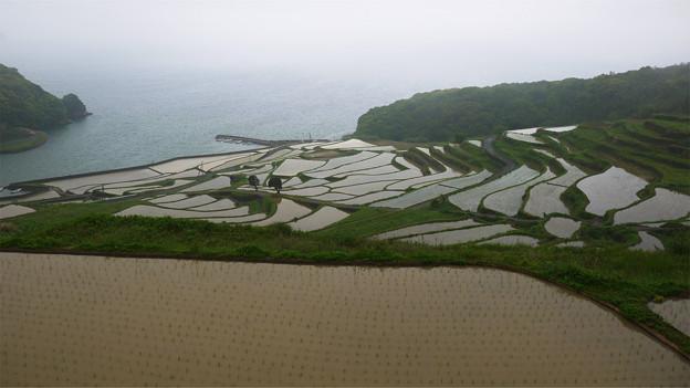 写真: 土谷棚田(4)