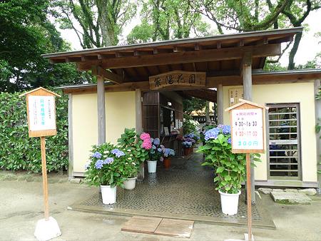 筥崎宮~紫陽花園(1)