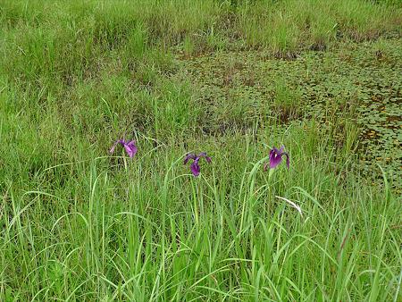 樫原湿原(8)