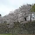 小倉城・勝山公園の桜(3)