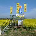 Photos: 築上町湊の菜の花畑(2)