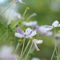 Photos: 紫白
