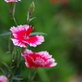 甘い色の花