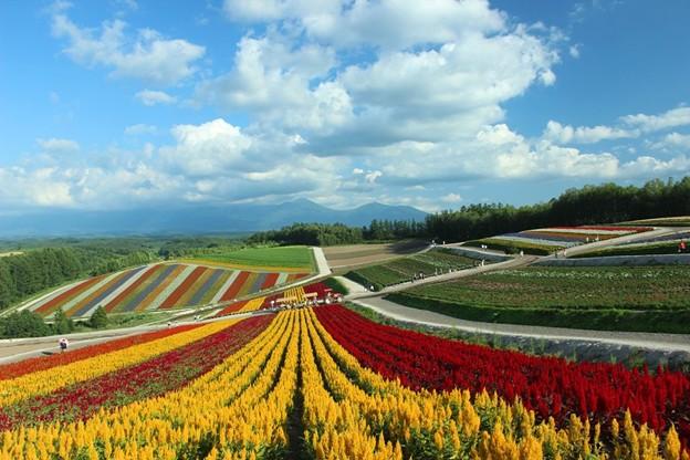 空とうねりの花畑