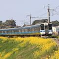 ローカル列車と菜の花