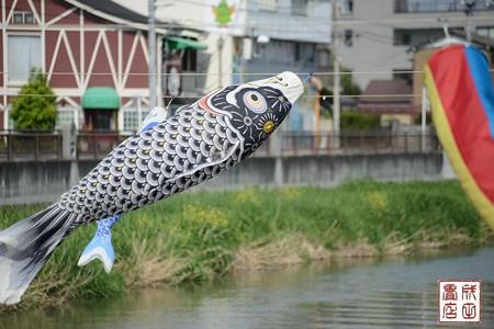 鯉のぼり01
