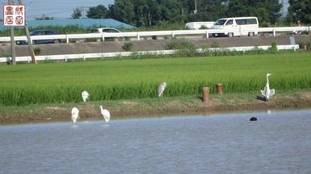 休耕田に水が02