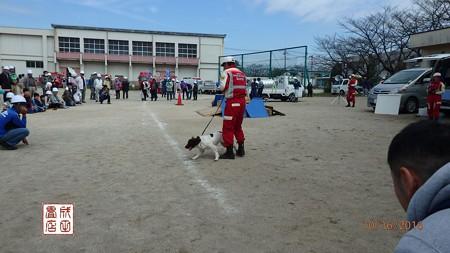 災害救助犬01