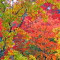 写真: ~晩秋~紅葉が眩しくて~(^^♪