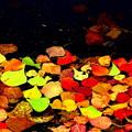 写真: ~晩秋~水辺の落ち葉・・・