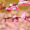写真: ~春は目の前だよ~♪明るくいこうぜぇ!なっ!~(´艸`*)