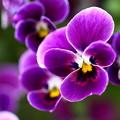 写真: ~紫紺~