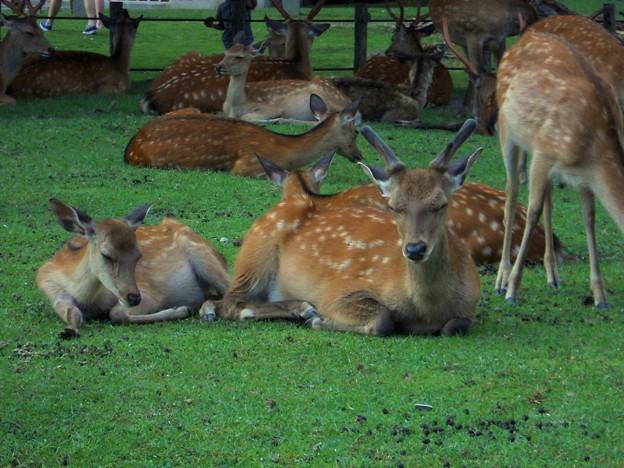 31 奈良公園