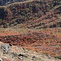 IMG_8843那須 茶臼岳 姥ヶ平の紅葉2