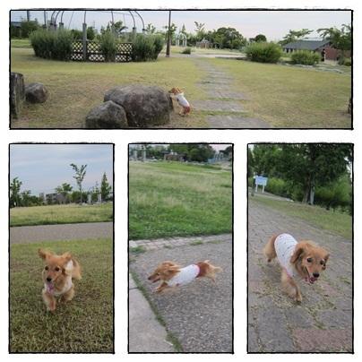 20110709 お散歩