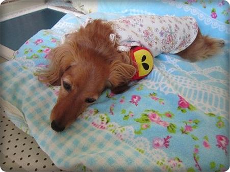 20110826 リンゴちゃんと添い寝