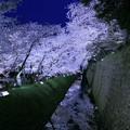 金沢城 お堀 満開の桜(2)