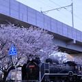 松任駅 北陸新幹線と桜