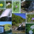 男女滝(なめたき)  能登 輪島(上大沢)