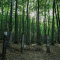 Photos: 美人林 森林浴の森 百選?