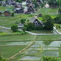 新緑の白川郷(3)