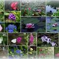 白川郷で見かけた花