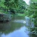 奥卯辰山健民公園 大池と白鳥