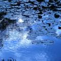 初秋の池(1)