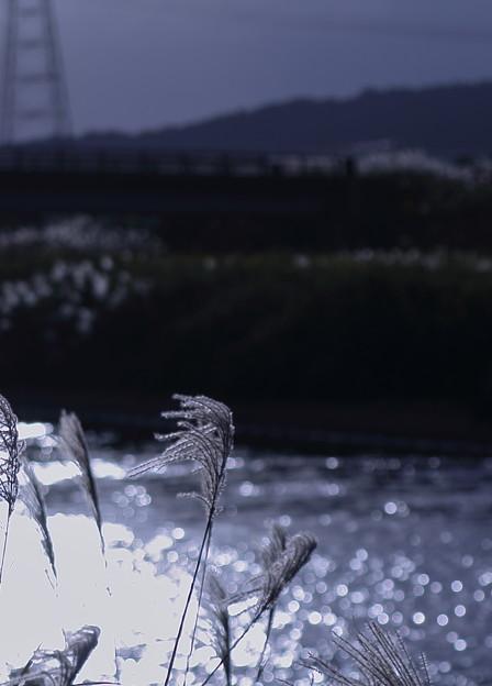 Photos: キラキラ ススキ *゚☆彡*