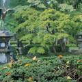 日比谷公園 落ち葉と鶴の噴水