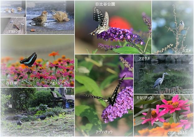 日比谷公園 花と蝶と鳥