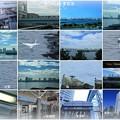 Photos: 東京湾とユリカモメ