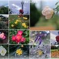 Photos: 横浜 山下公園