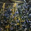 写真: クリスマスツリー2