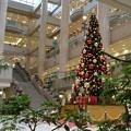 写真: クリスマスツリー ランドマークタワー内