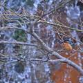 写真: 兼六園 瓢池 翠滝に翡翠