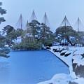 写真: 雪の兼六園 唐崎松 ツルが羽を広げたように