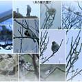 1月の兼六園で 野鳥