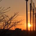 写真: 夕陽と桜の蕾