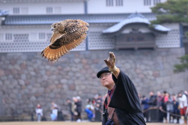 写真: 鷹匠とミミズク(3)