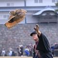 Photos: 鷹匠とミミズク(3)